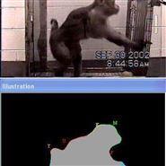 非人灵长类动物全自动笼内行为识别系统