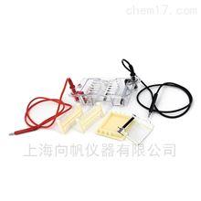 DYCP-31BN型琼脂糖水平电泳仪(微型)