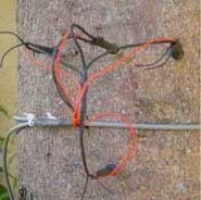 树干茎流仪