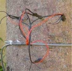 SF-L树干茎流仪