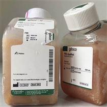 大鼠血漿價格,現貨促銷中