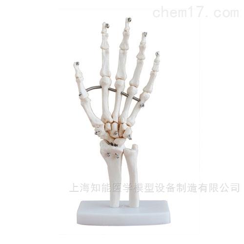 手关节骨骼模型
