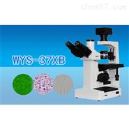 三目倒置生物顯微鏡
