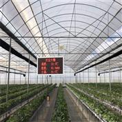 RS-QXZN建大草莓视频污版app智慧農業溫室大棚監測農業傳感器