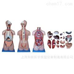 BIX-XC206医学人体解剖模型