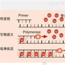 SYBR Green 染料检测