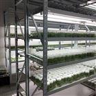 植物组培设备  组织培养架
