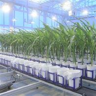 比利时WIWAMWIWAM XY高通量植物表型组学成像模块