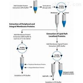 786-018G-biosciences FOCUS蛋白质分级分离试剂盒