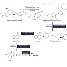 786-430G-Biosciences SAM510甲基转移酶检测试剂盒