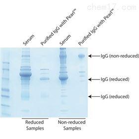 786-799G-Biosciences Pearl™ IgG抗体纯化试剂盒