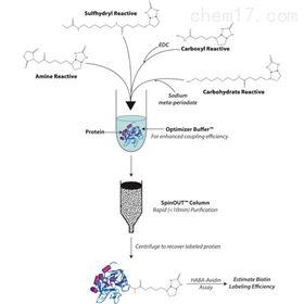 BS-16HOOK-Biotin-PEG2-Amine试剂盒
