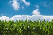 食品中農藥最大殘留限量標準更新 農殘標準達到1萬項