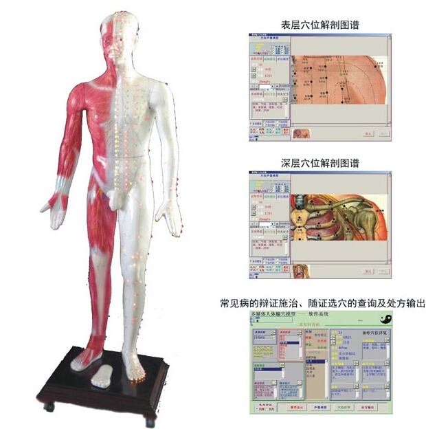 知能医学模型多媒体人体针灸穴位发光模型