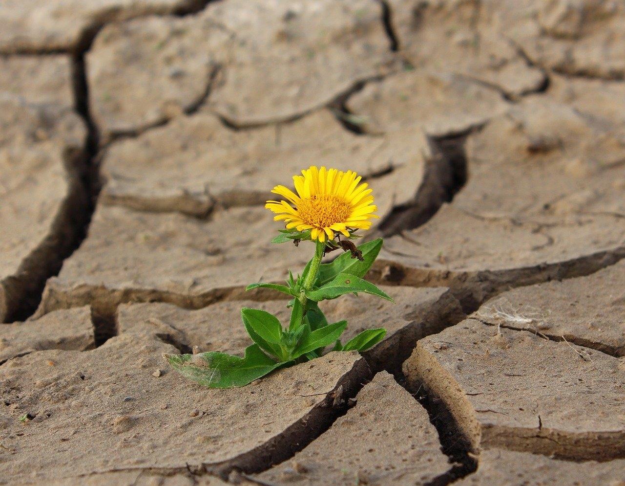土地荒漠化和干旱是人类急需面对的问题之一
