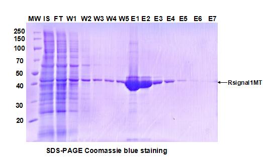 昆虫杆状病毒表达系统;Protein Expression in Baculovirus