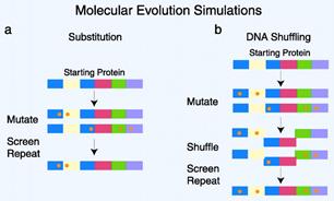 酶和蛋白定向突变; Directed Enzyme & Protein Evolution
